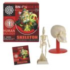 EIN-O Skeleton Box Kit - Human Biology