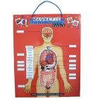 Magnetic Body Parts Puzzle