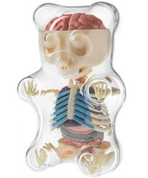 Clear Gummy Bear Anatomy Model