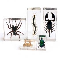 Biology For Kids - Arthropods Specimens Collection