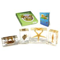 Biology For Kids - Sea Life Specimen Set