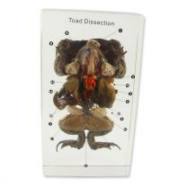 Toad Dissection Specimens