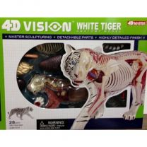 4D Vision White Tiger Anatomy Model