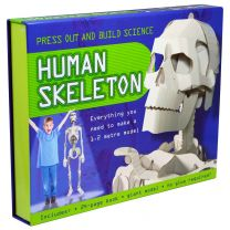 Human Skeleton-Press Out & Build