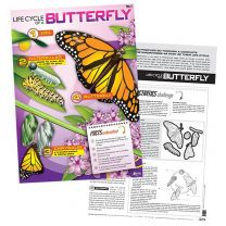 Lifecycle of a Butterfly Poster