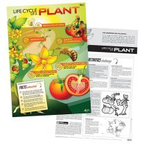 Lifecycle of a Plant Poster