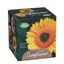 Giant Sunflower Cup