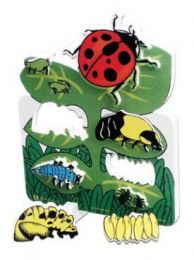 Book Plus Models - Ladybug Lifecycle