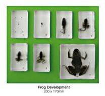 Frog Development Set
