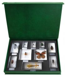 Insect Orders - 10 Specimens